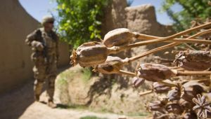 Afghan Opium Production 40 Times Higher Since US-NATO Invasion